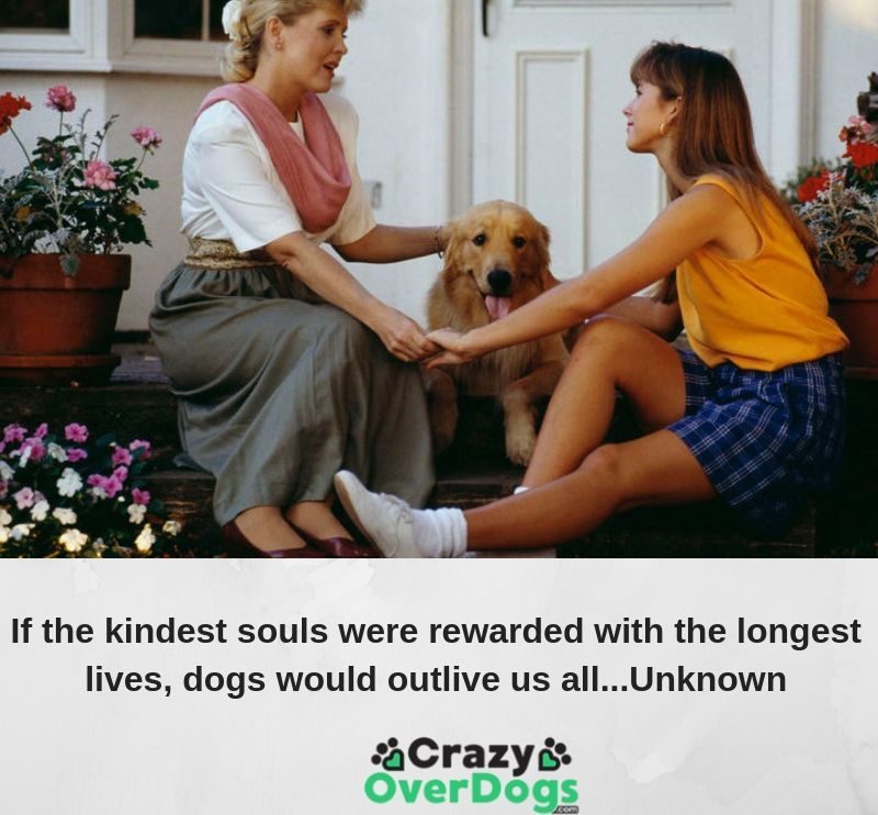 If the kindest souls were rewarded with the longest lives, dogs would outlive us all...Unknown