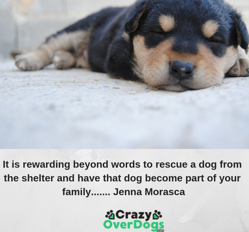It is rewarding beyond words to rescue a dog from the shelter and have that dog become part of your family.......................Jenna Morasca