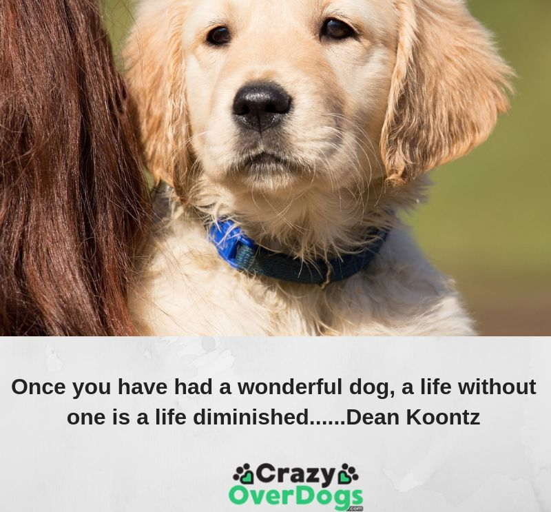 Once you have had a wonderful dog, a life without one is a life diminished......Dean Koontz