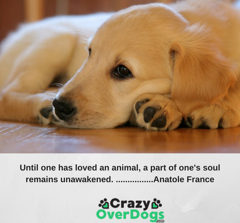Until one has loved an animal, a part of one's soul remains unawakened.... Anatole France
