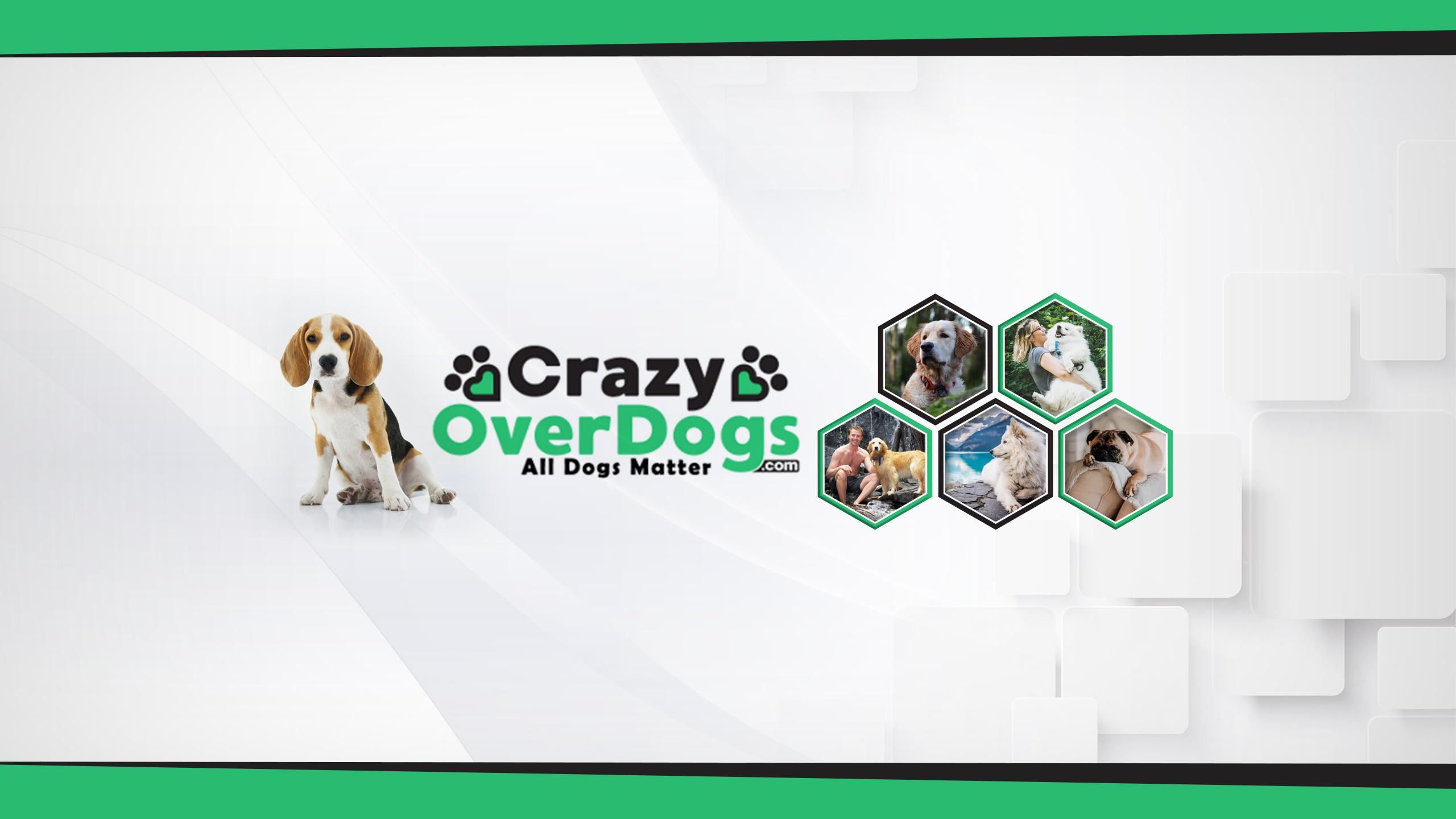 Crazy Over Dogs YouTube Channel