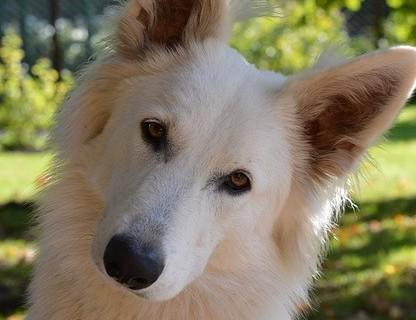 Why Do Dogs Tilt Their Heads: