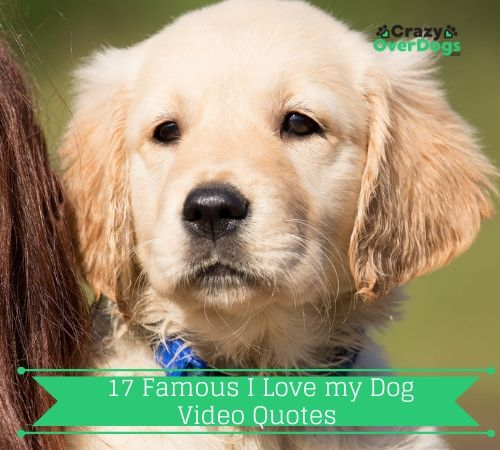 17 Famous I Love my Dog Video Quotes