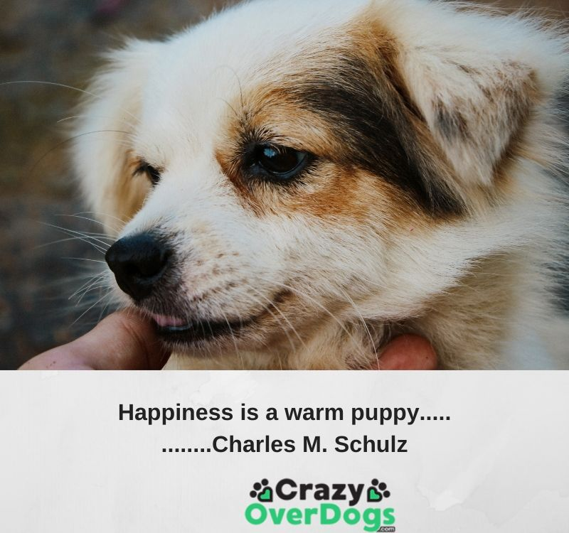 Happiness is a warm puppy..........Charles M. Schulz