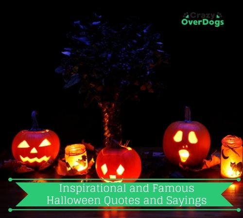 Inspirational and Famous Halloween Quotes and Sayings..