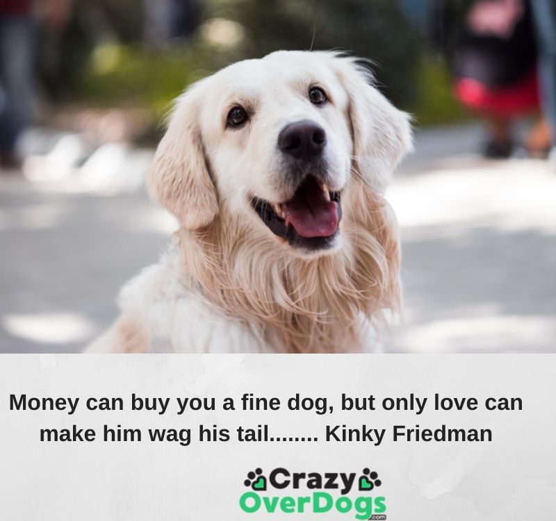 Money can buy you a fine dog, but only love can make him wag his tail........ Kinky Friedman