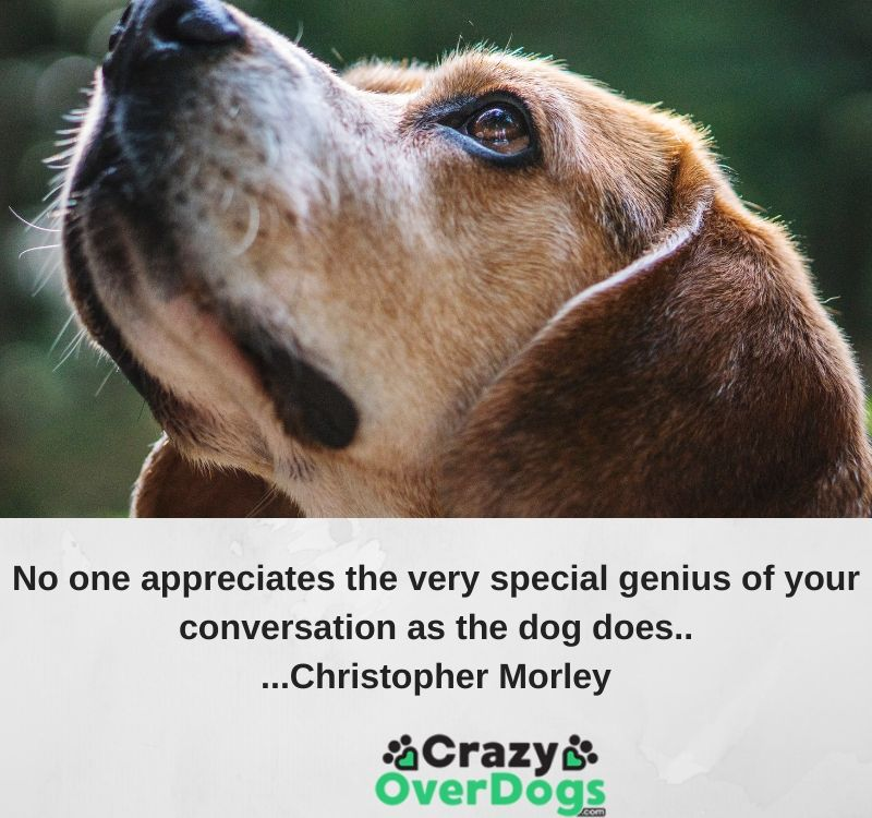 No one appreciates the very special genius of your conversation as the dog does.....Christopher Morley