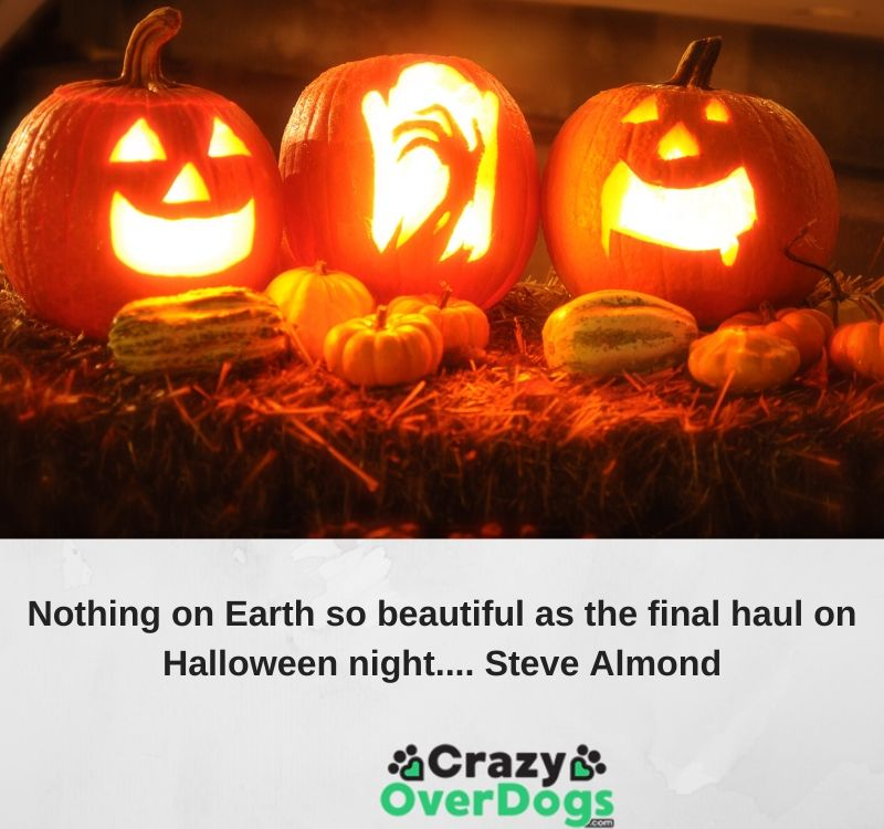 Nothing on Earth so beautiful as the final haul on Halloween night.... Steve Almond