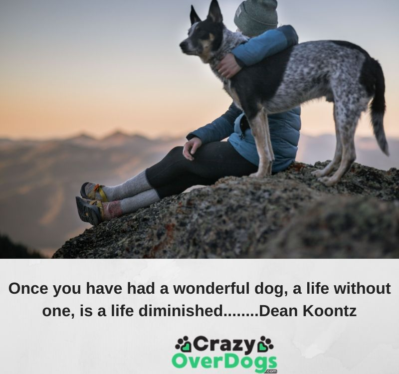 Once you have had a wonderful dog, a life without one, is a life diminished........Dean Koontz