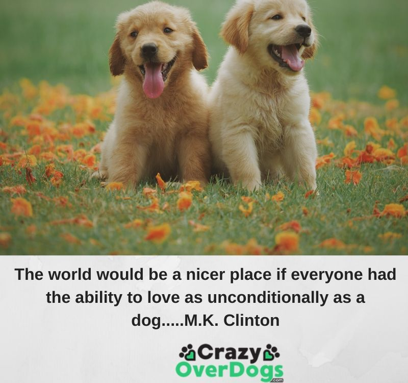 The world would be a nicer place if everyone had the ability to love as unconditionally as a dog...M.K. Clinton