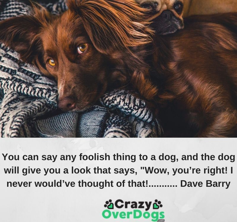 "You can say any foolish thing to a dog, and the dog will give you a look that says, ""Wow, you're right! I never would've thought of that!........... Dave Barry"