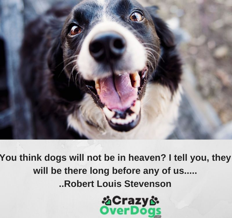 You think dogs will not be in heaven? I tell you, they will be there long before any of us....Robert Louis Stevenson