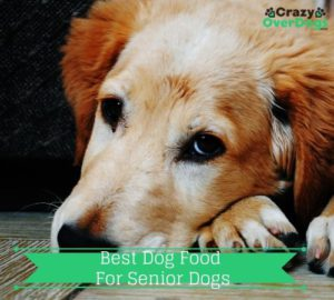Best Dog Food For Senior Dogs