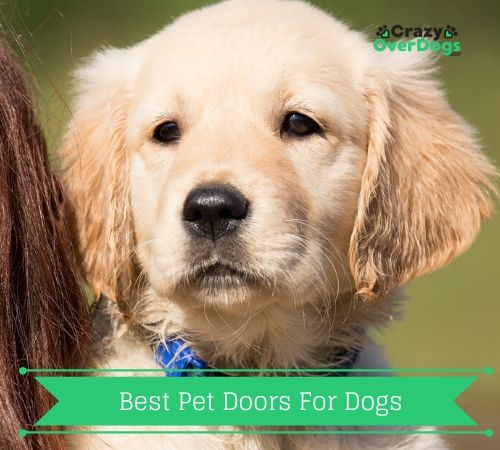 Best Pet Doors For Dogs