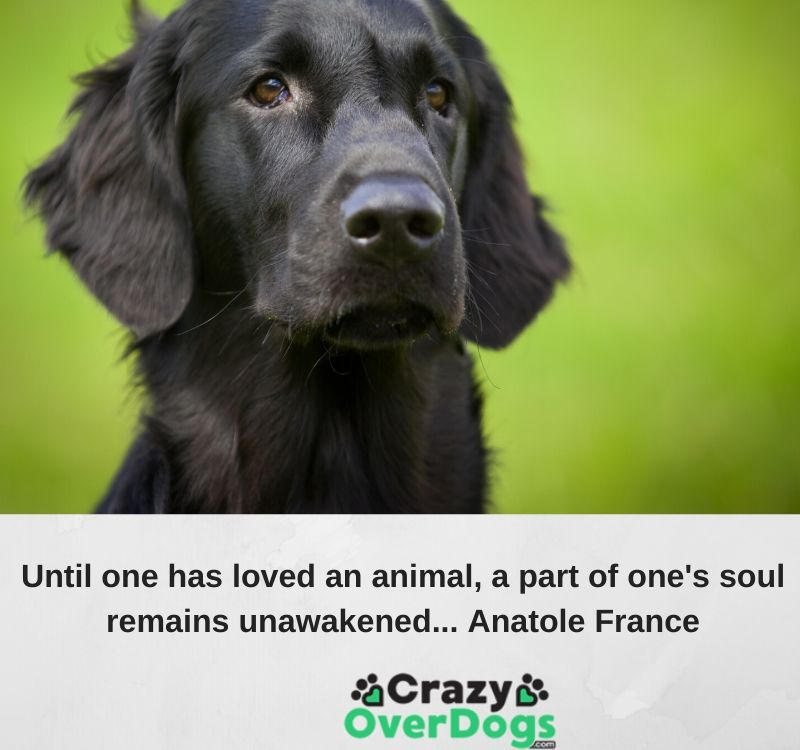 beloved dog quotes - Until one has loved an animal, a part of one's sould remains unawakened.... Anatole France
