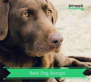 Buying Guide For Dog Product - Best Ramp For Dogs