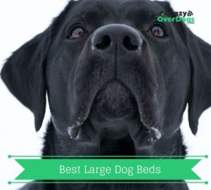 Buying Guide for best large dog beds