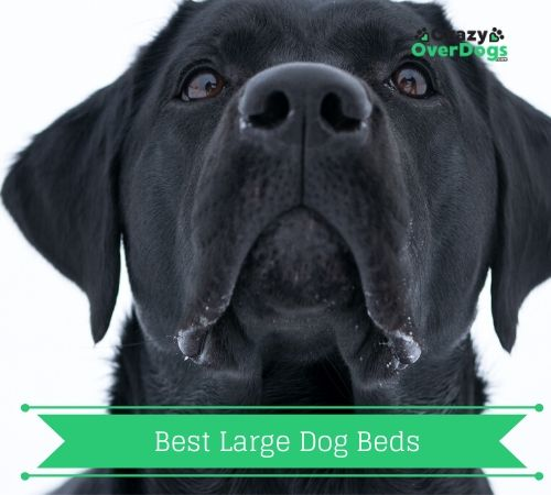 Best Dog Bed For Large Dogs