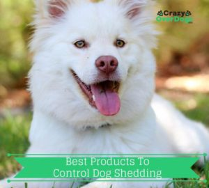 Best Products to Control Dog Shedding