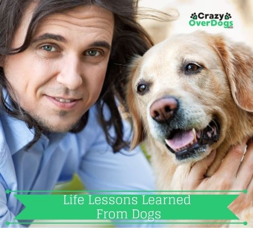 Life Lessons Learned From Dogs