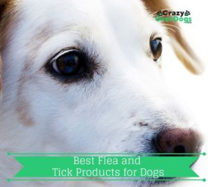Buying Guides For Dog Products - Best Flea and Tick Products for Dogs