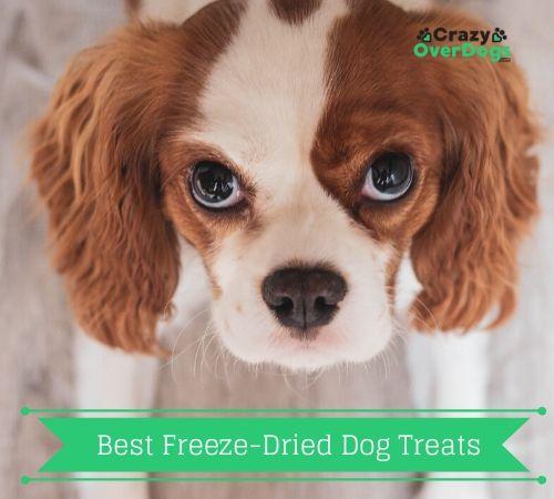 Best Freeze-Dried Dog Treats