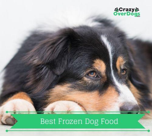 Best Frozen Dog Food