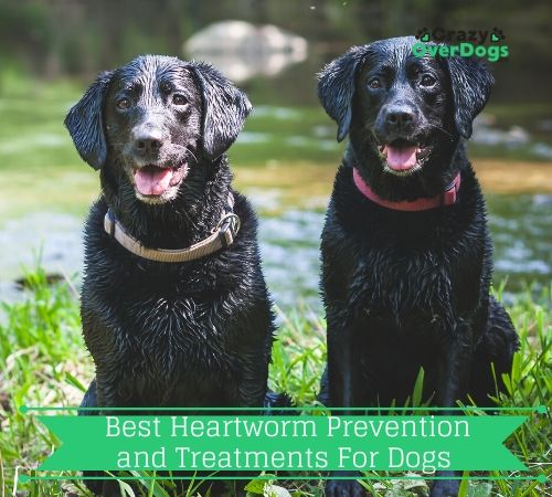 Best Heartworm Prevention and Treatments For Dogs
