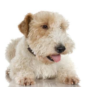 Best Freeze Dried Dog Treats
