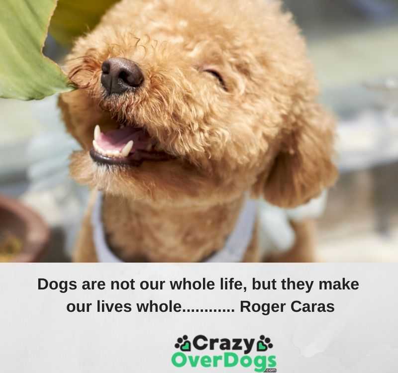 dogs are not our whole life, but they make our lives whole..roger caras
