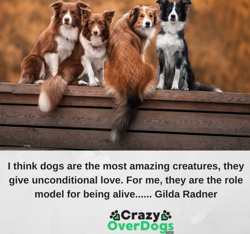 I think dogs are the most amazing creatures, they give unconditional love. For me, they are the role model for being alive...... Gilda Radner