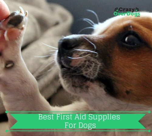 first aid supplies for dogs