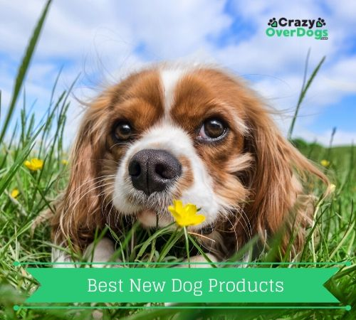 Best New Dog Products