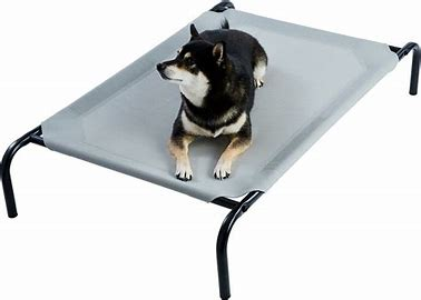 best new dog products - elevated dog bed