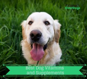 Best Dog Vitamins and Supplements - 2020 Buying Guide