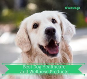 Best Dog Healthcare and Wellness Products