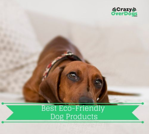Best Eco-Friendly Dog Products