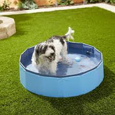 best products for out fun with dogs