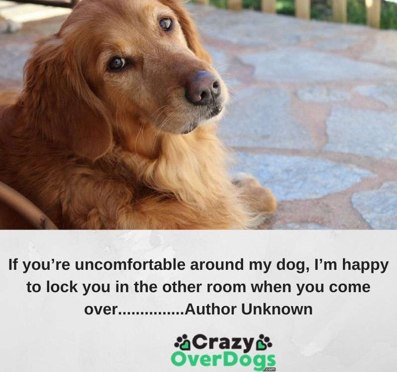 If you're uncomfortable around my dog, I'm happy to lock you in the other room when you come over. ..............Author Unknown