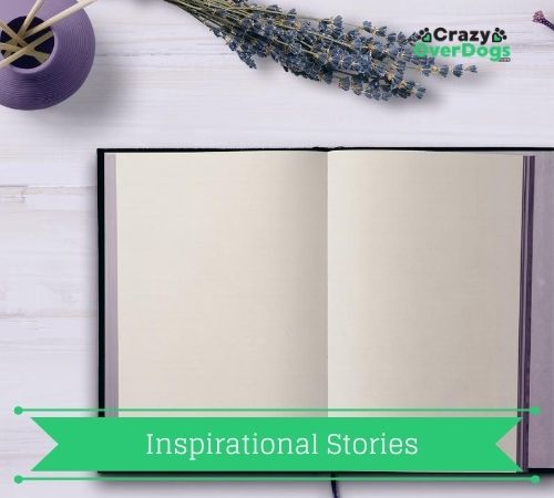 Inspirational Stories For Dog Lovers