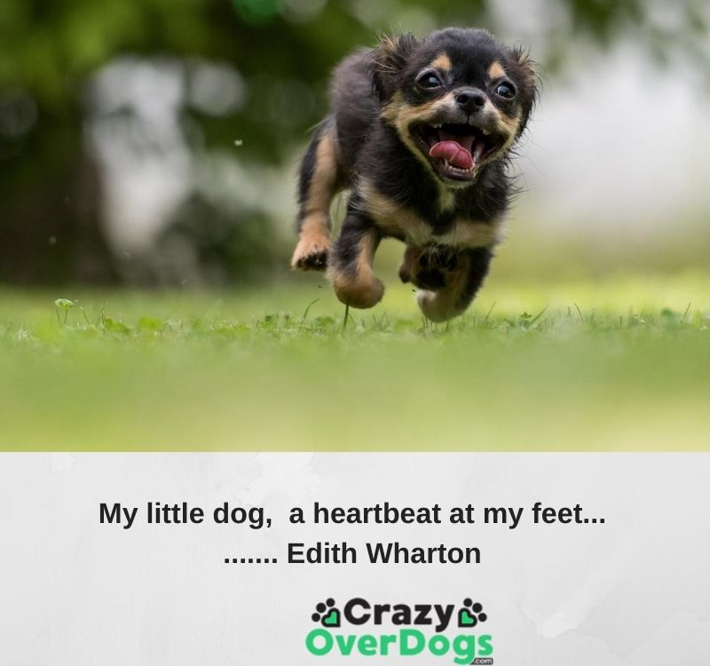 Inspirational Dog Quotes