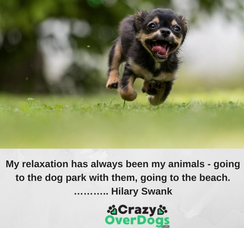 My relaxation has always been my animals - going to the dog park with them, going to the beach.……….. Hilary Swank
