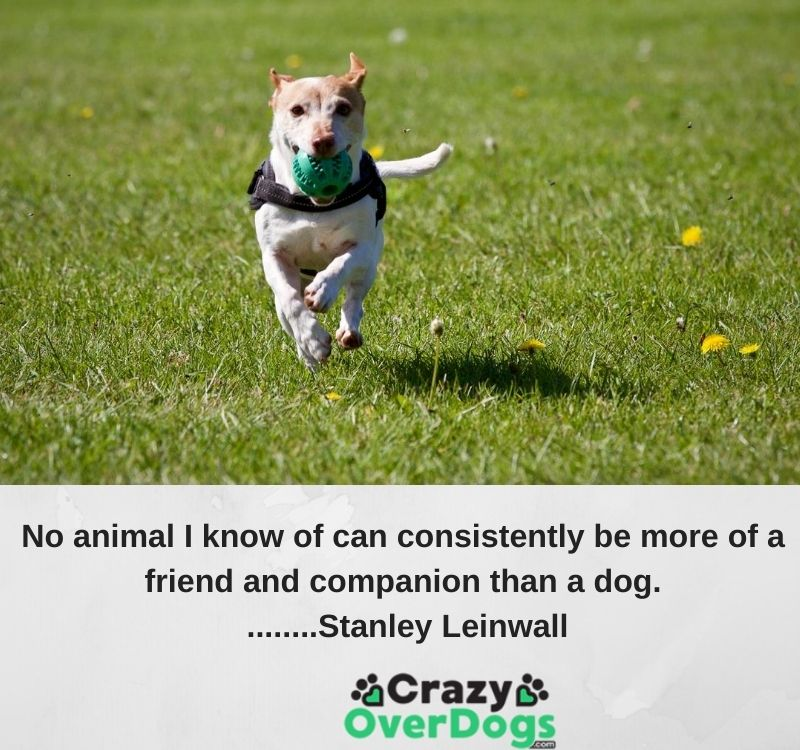 No animal I know of can consistently be more of a friend and companion than a dog. ........Stanley Leinwall