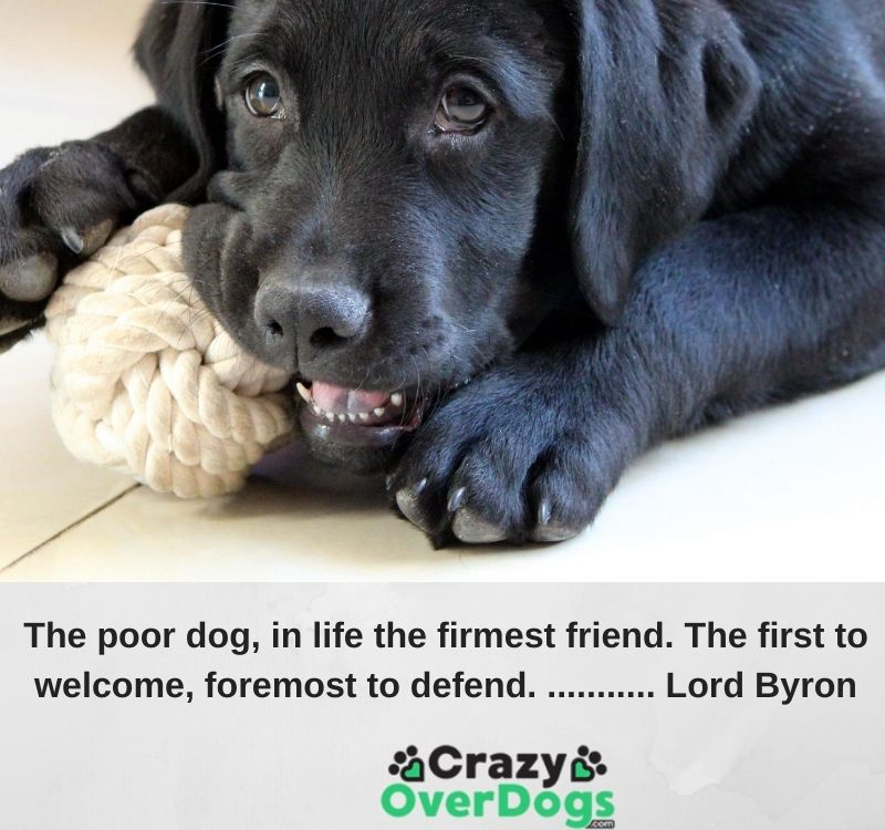 The poor dog, in life the firmest friend. The first to welcome, foremost to defend. ........... Lord Byron