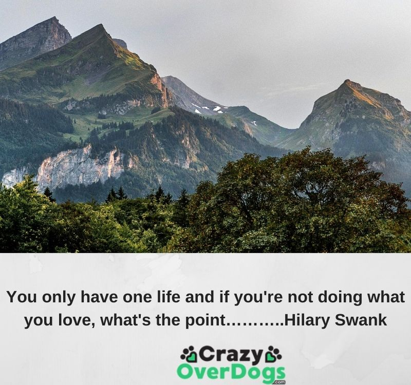 You only have one life and if you're not doing what you love, what's the point………..Hilary Swank