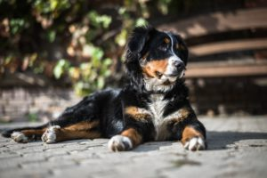 what is canine arithritis