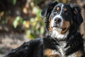 treatment for canine arithritis