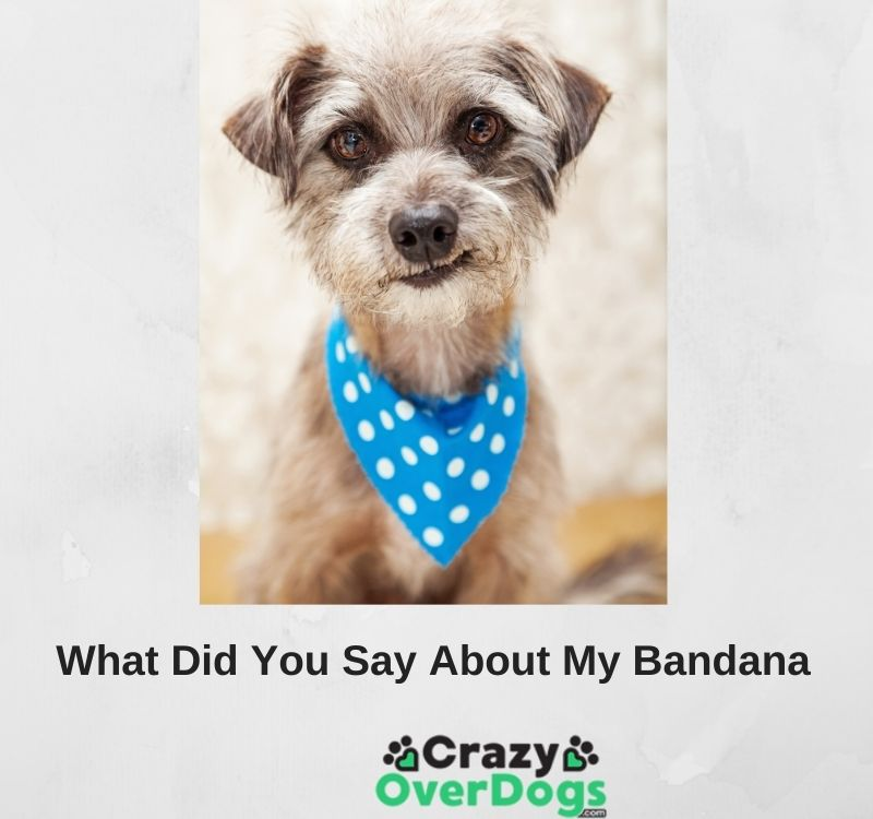 funny dog pictures with captions