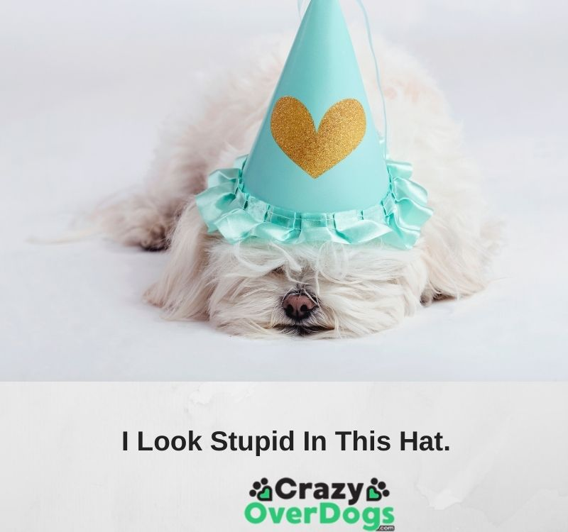 funy dog pictures with captions