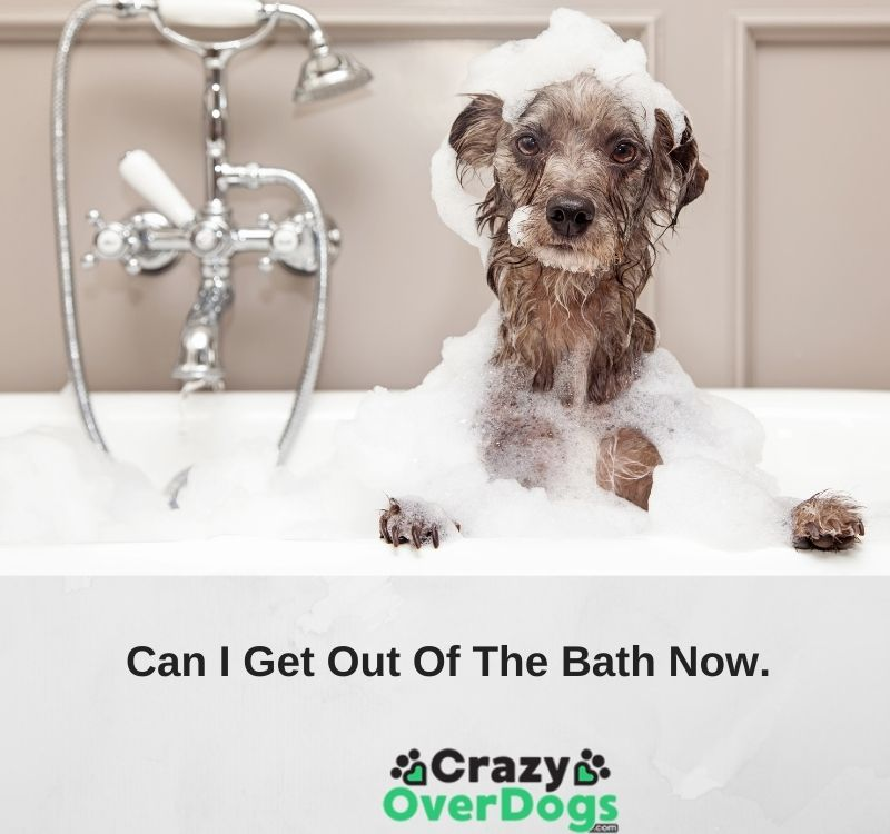funny dog pictures with pictures
